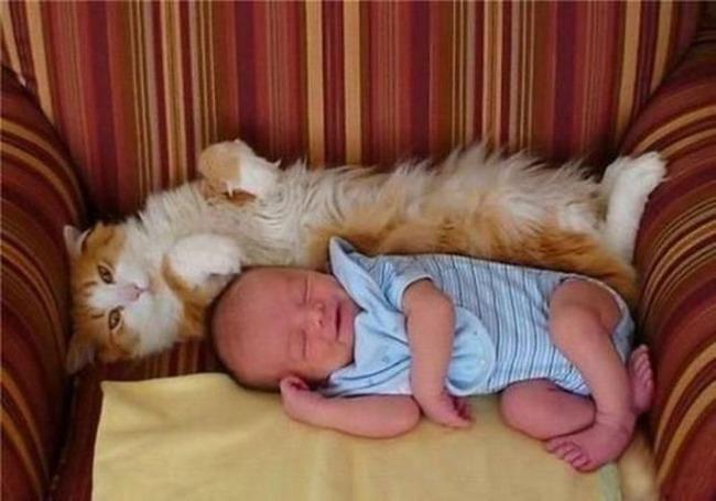 фото 5: Котоматрица: С кем спать?