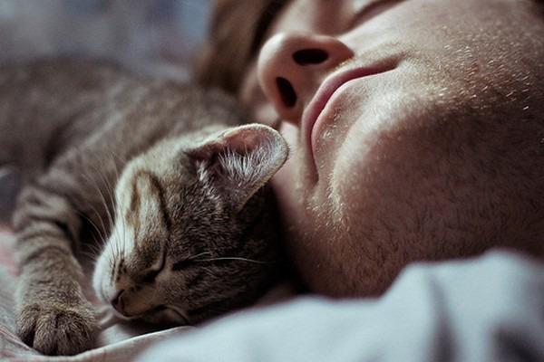 фото 7: Котоматрица: С кем спать?