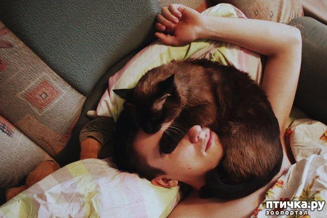 фото 9: Котоматрица: С кем спать?