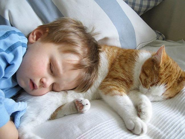 фото 10: Котоматрица: С кем спать?
