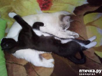 фото: Можно ли подружить маму кошку с сыном котёнком?