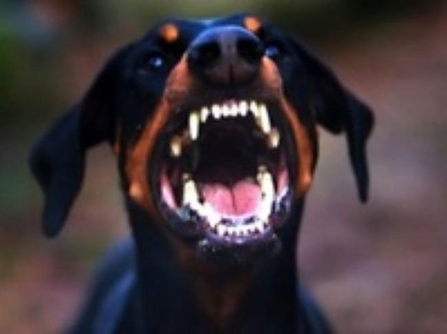 фото 2: Собака в квартире - быть или не быть?