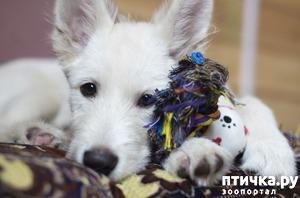 фото: Самый лучший щенок ищет родителей!