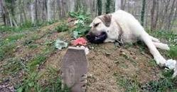 фото: Собачье сердце