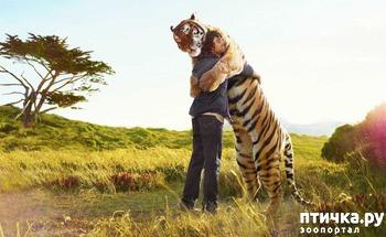 фото: Продолжительность жизни некотрых животных