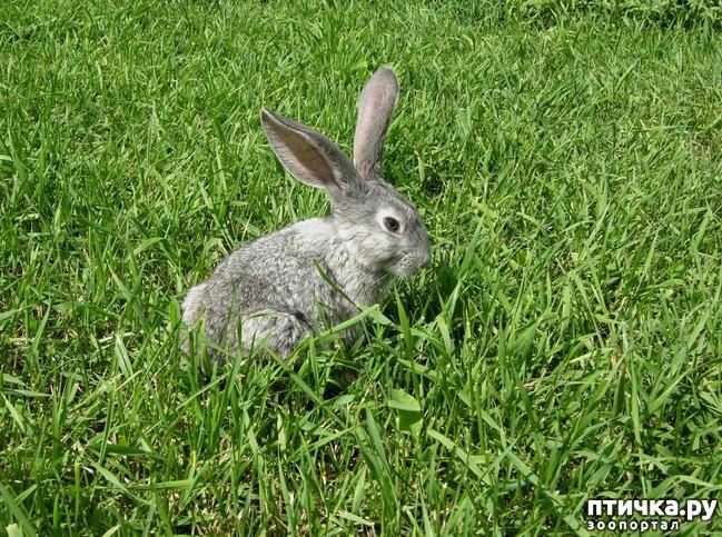 фото 1: Наши очаровательные животные