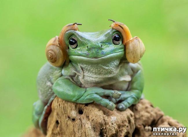фото 2: Индонезиец делает необычные фотографии лягушек