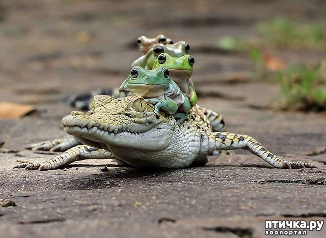 фото 1: Индонезиец делает необычные фотографии лягушек