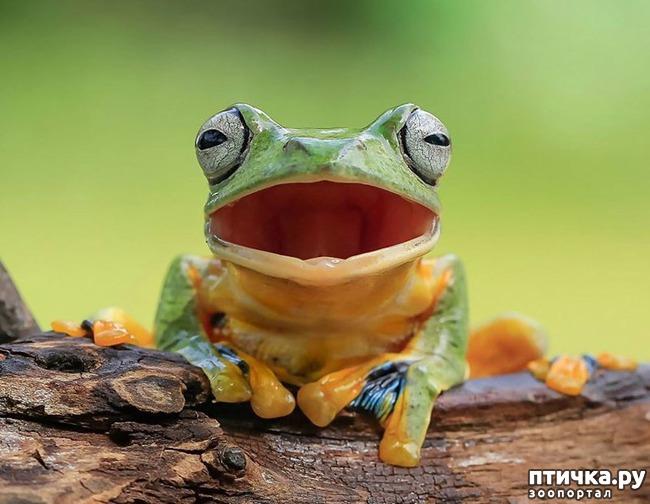 фото 3: Индонезиец делает необычные фотографии лягушек