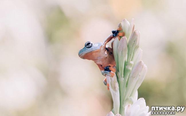 фото 4: Индонезиец делает необычные фотографии лягушек