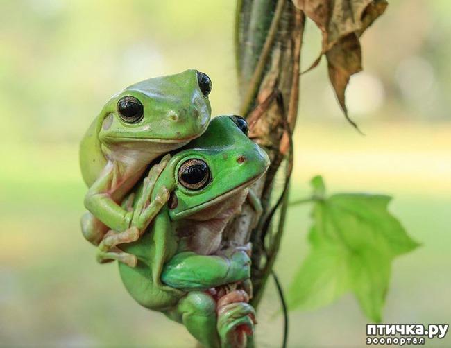 фото 5: Индонезиец делает необычные фотографии лягушек