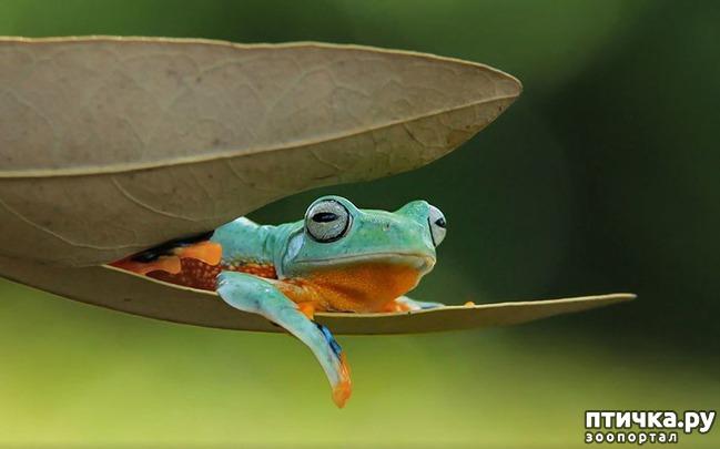 фото 6: Индонезиец делает необычные фотографии лягушек