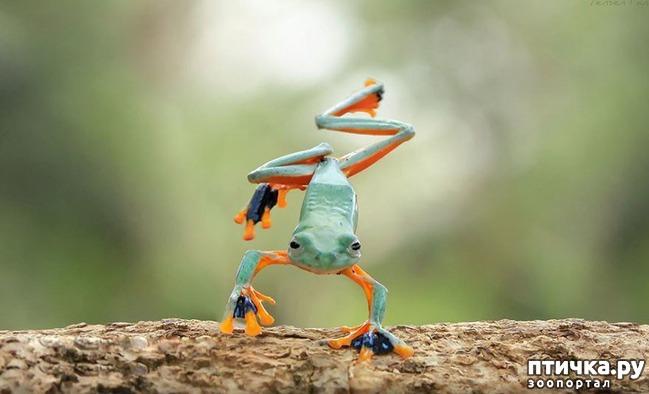 фото 8: Индонезиец делает необычные фотографии лягушек