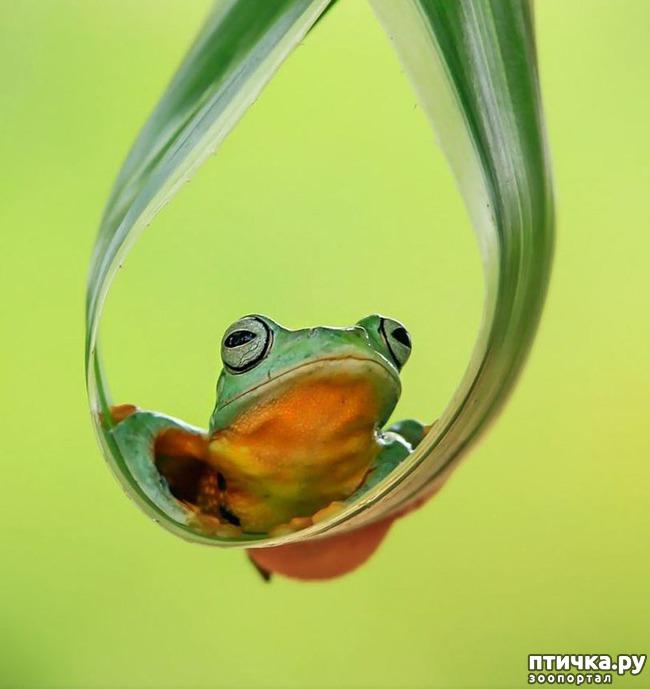 фото 9: Индонезиец делает необычные фотографии лягушек