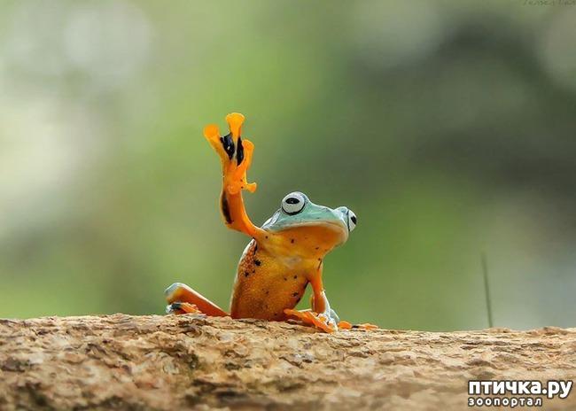 фото 11: Индонезиец делает необычные фотографии лягушек
