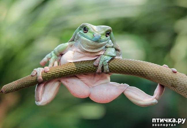 фото 12: Индонезиец делает необычные фотографии лягушек