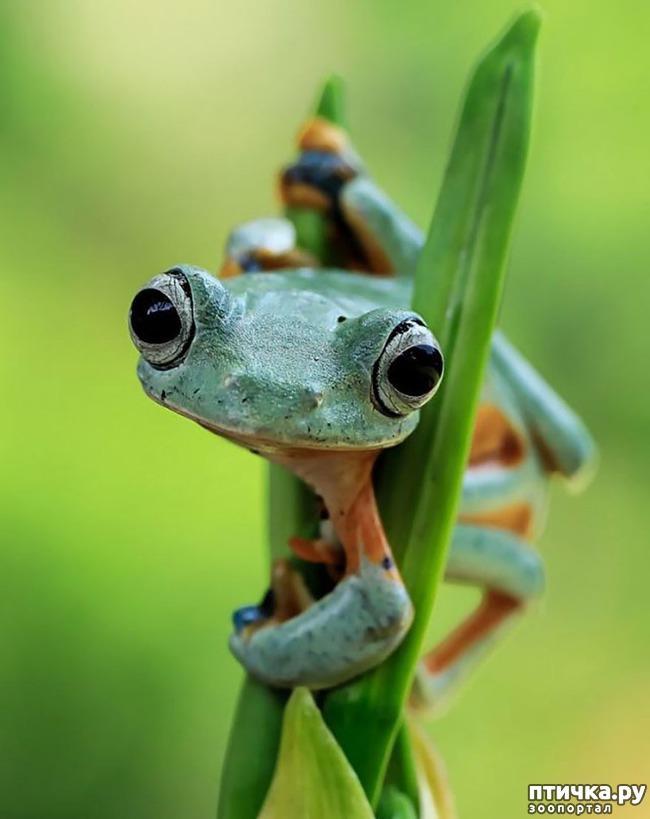 фото 13: Индонезиец делает необычные фотографии лягушек
