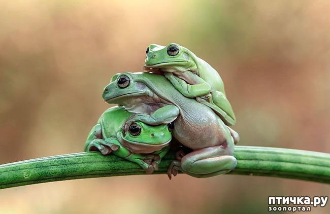 фото 14: Индонезиец делает необычные фотографии лягушек
