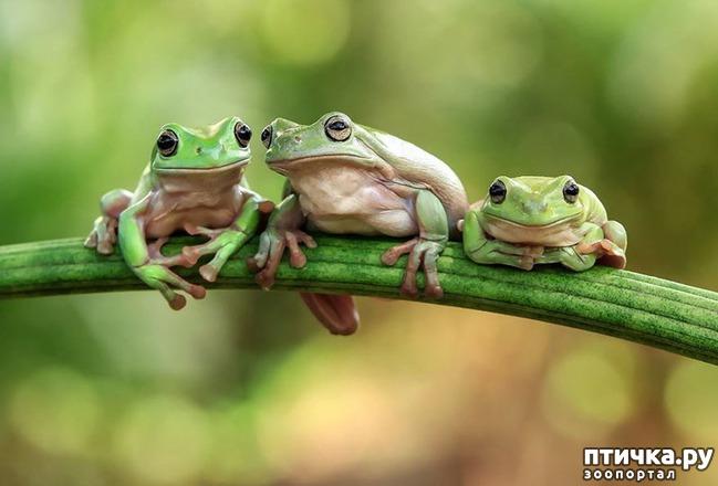 фото 15: Индонезиец делает необычные фотографии лягушек