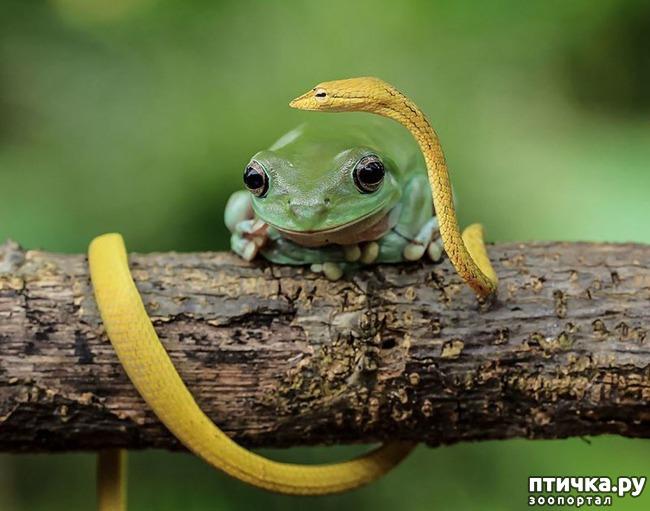 фото 16: Индонезиец делает необычные фотографии лягушек