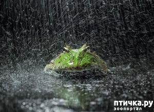 фото: Индонезиец делает необычные фотографии лягушек