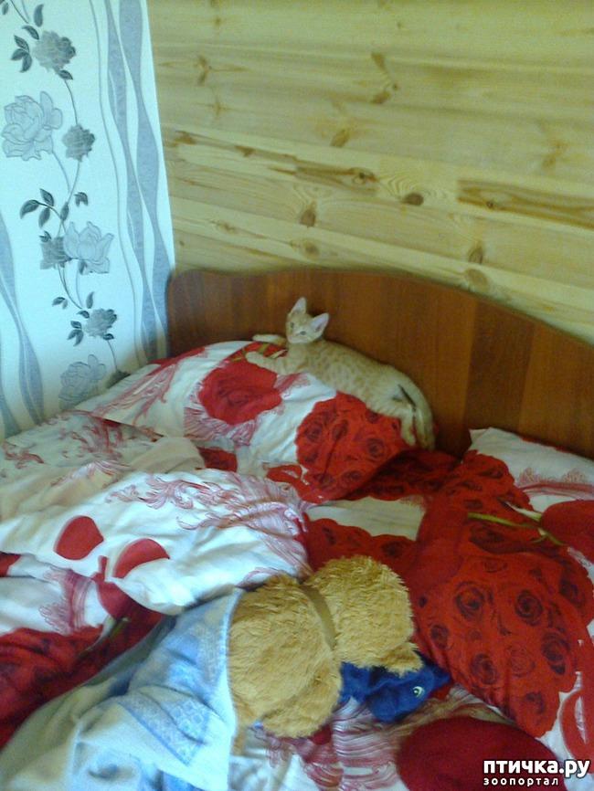 фото 5: Кот и липкая лента от мух
