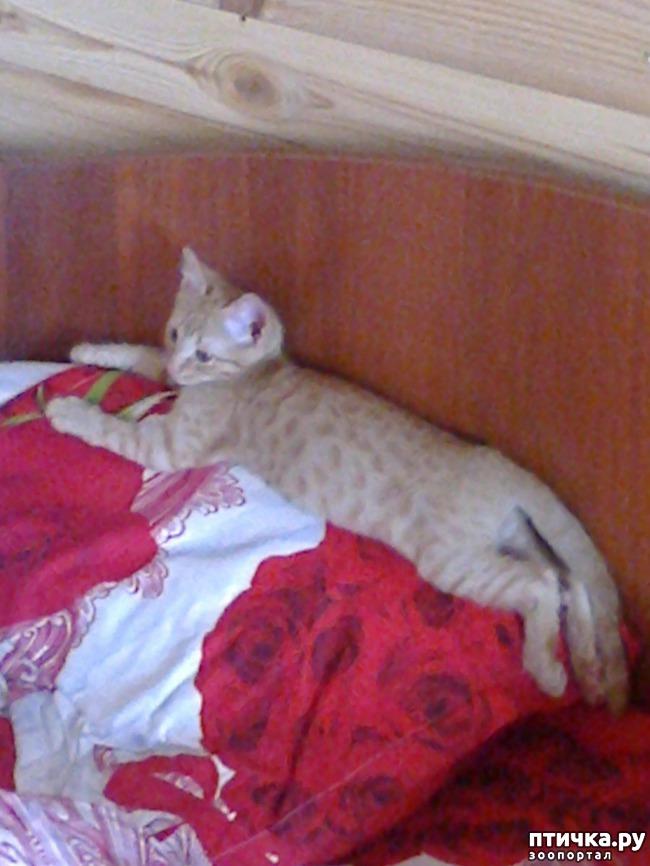 фото 6: Кот и липкая лента от мух