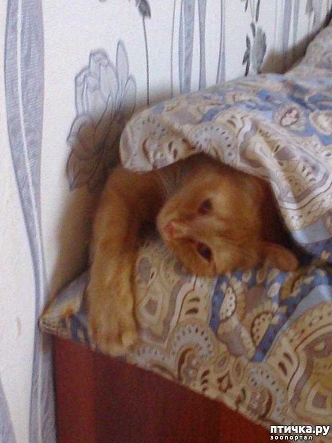 фото 7: Кот и липкая лента от мух