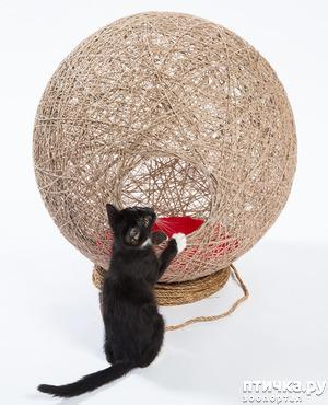 фото: Архитекторы создают потрясающие дома для кошек, чтобы помочь бездомным кошачьим