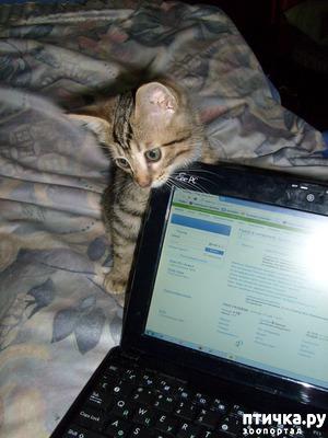 фото: Чкалов. Мой кот.