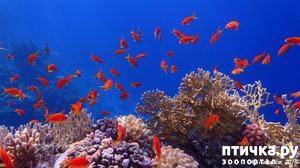 фото: Рыбы умеют разговаривать!