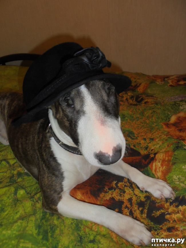 фото 3: Моя собака