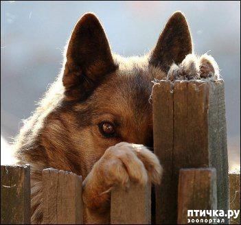 фото 1: Говорят, Бог смотрит на людей глазами собак...