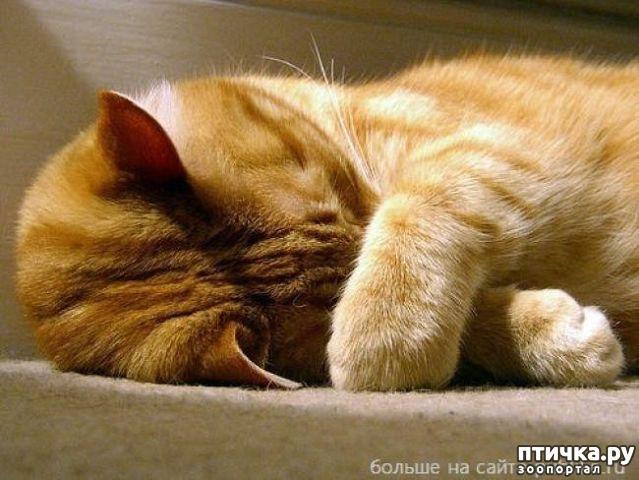 фото 1: Почему кошка прячет нос.