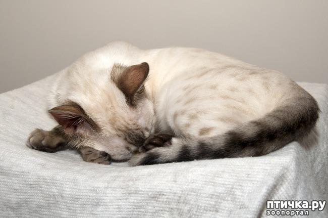 фото 3: Почему кошка прячет нос.