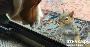 фото: Эта очаровательная белка 8 лет подряд прибегает к окнам одной семьи. И вот почему...