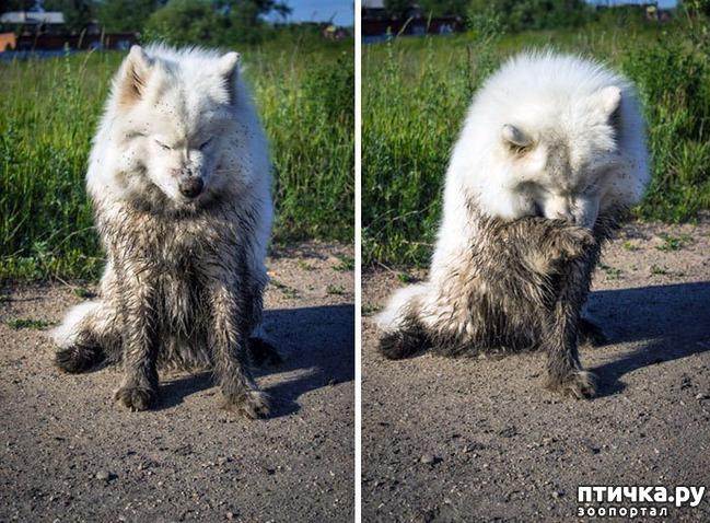 фото 24: 30 собак, чьи хозяева сильно пожалели, что отстегнули поводок