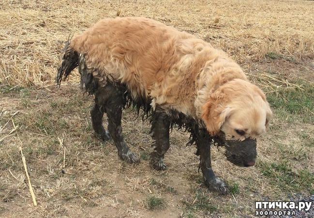 фото 3: 30 собак, чьи хозяева сильно пожалели, что отстегнули поводок