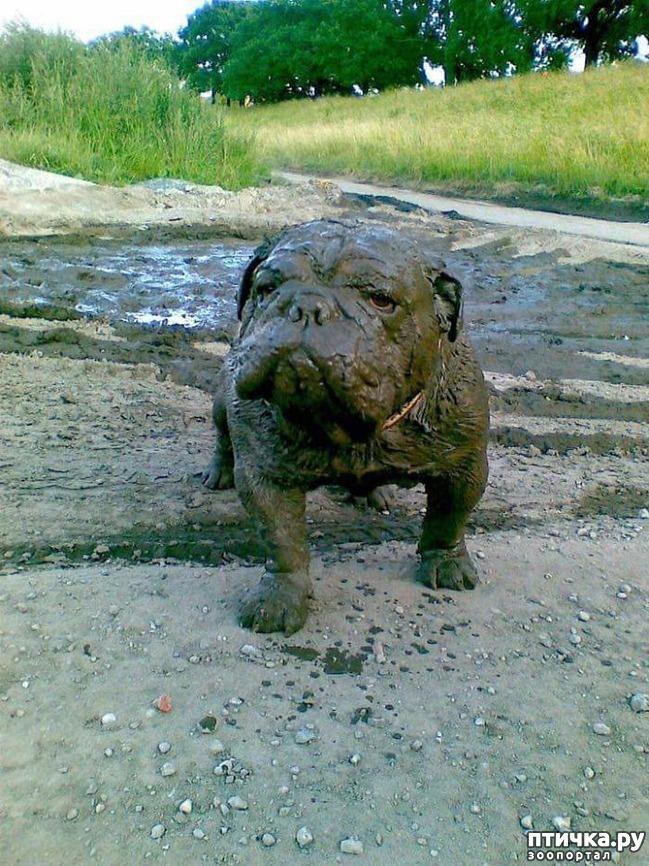 фото 4: 30 собак, чьи хозяева сильно пожалели, что отстегнули поводок