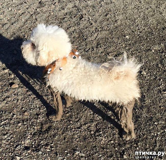 фото 6: 30 собак, чьи хозяева сильно пожалели, что отстегнули поводок