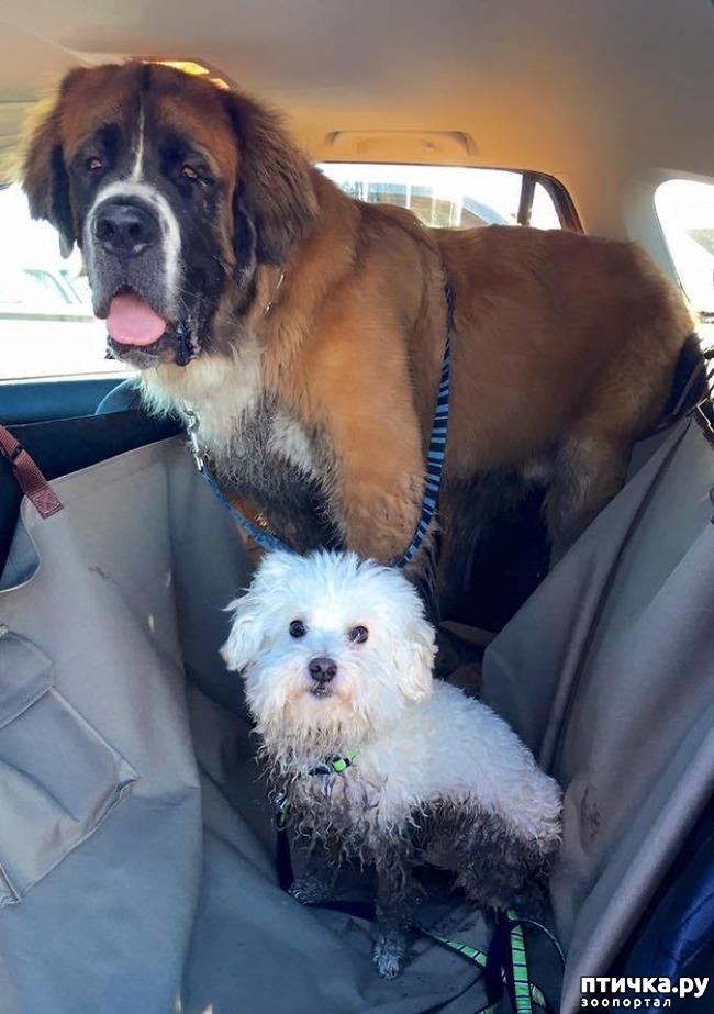 фото 8: 30 собак, чьи хозяева сильно пожалели, что отстегнули поводок