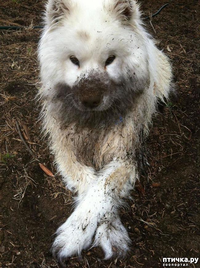 фото 9: 30 собак, чьи хозяева сильно пожалели, что отстегнули поводок