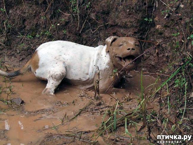 фото 11: 30 собак, чьи хозяева сильно пожалели, что отстегнули поводок