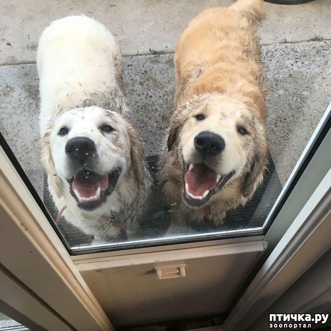 фото 13: 30 собак, чьи хозяева сильно пожалели, что отстегнули поводок
