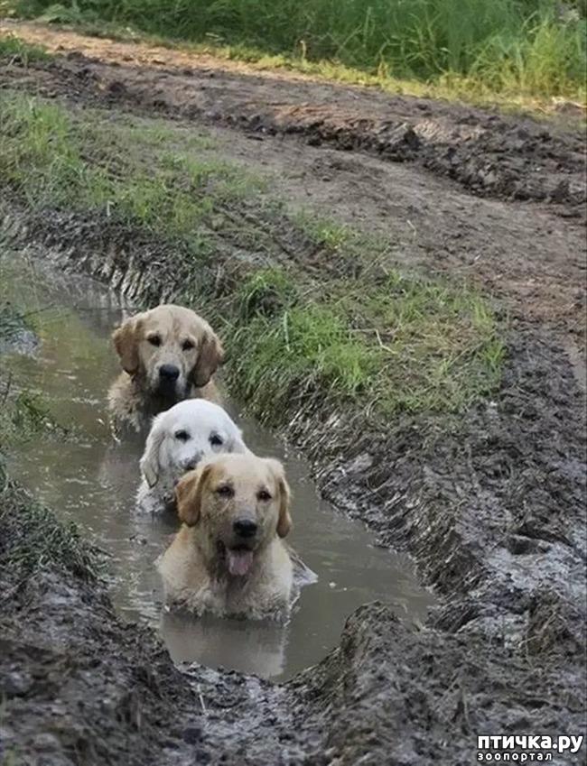 фото 14: 30 собак, чьи хозяева сильно пожалели, что отстегнули поводок