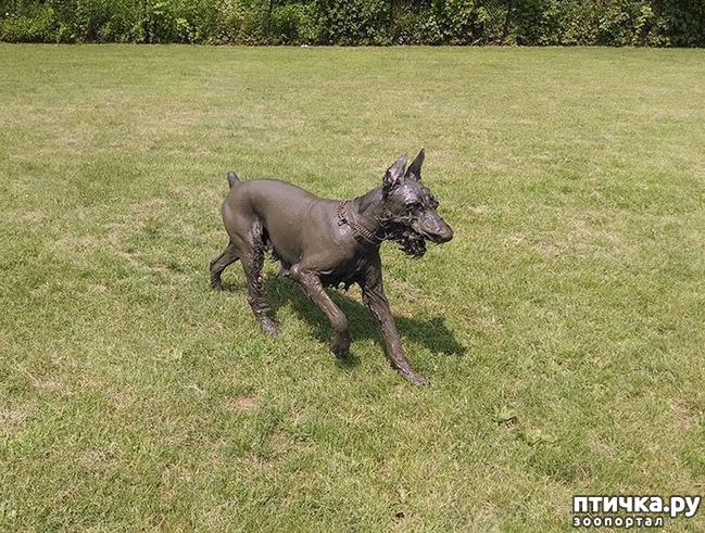 фото 17: 30 собак, чьи хозяева сильно пожалели, что отстегнули поводок