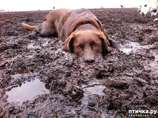 фото 19: 30 собак, чьи хозяева сильно пожалели, что отстегнули поводок