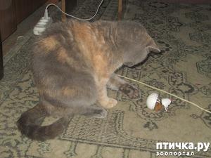 фото: Зимняя мышь