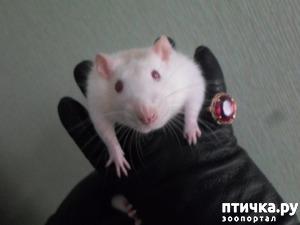 фото: Лариска-крыска