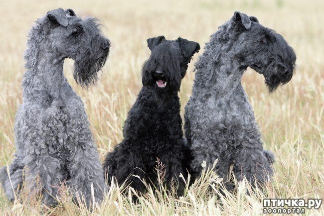 фото 2: Год Собаки 2018: какая порода вам подходит по знаку зодиака